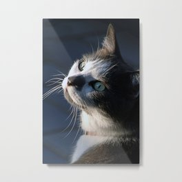 Domestic Short-haired Cat Metal Print