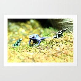Frogs! Art Print