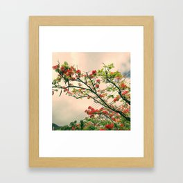 Pink flambloyant Framed Art Print
