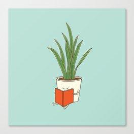 indoor plants Canvas Print