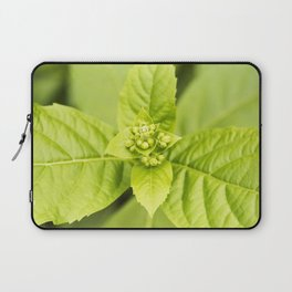 Blue Glory Bower Buds Laptop Sleeve