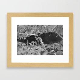 Black plume Framed Art Print