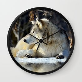 Wolf resting Wall Clock