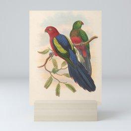 009 Yellow winged King Parrot aprosmictus callopterus4 Mini Art Print