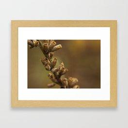 Seed Pods Framed Art Print