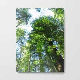 Armstrong Woods 3415 Metal Print