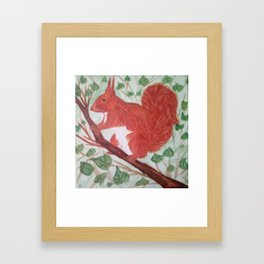 Red squirel on a hazel tree branch Framed Art Print