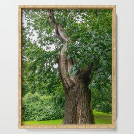 Broadleaf Tree in a Park Serving Tray