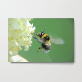 Busy Little Bee - Garden Photography by Fluid Nature Metal Print