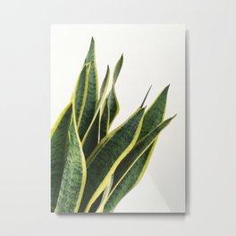 Sansevieria Metal Print