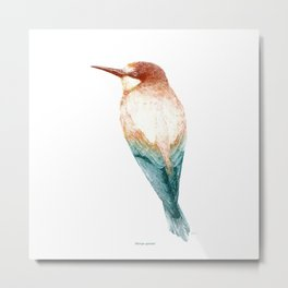 European bee-eater (Merops apiaster) - color Metal Print
