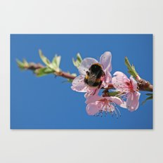 Bumblebee and Peach Blossom Canvas Print