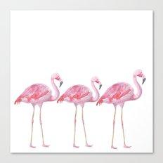 Flamingo - bird - animal on white backround Canvas Print