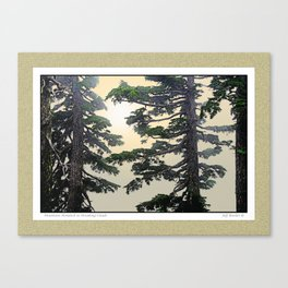 MOUNTAIN HEMLOCK IN BREAKING CLOUDS Canvas Print
