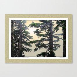MOUNTAIN HEMLOCK IN BREAKING CLOUDS Canvas Print