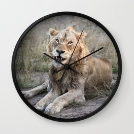 Male African Lion Wall Clock