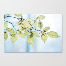 bight summer laves Canvas Print