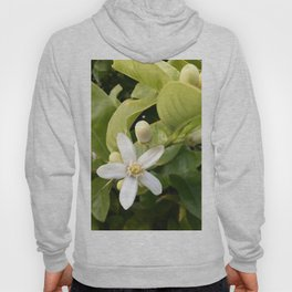 Citrus flower Hoody