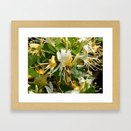 Honeysuckle Bee Framed Art Print
