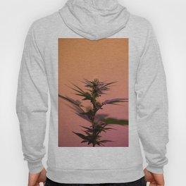 Macro cannabis kush photo Hoody