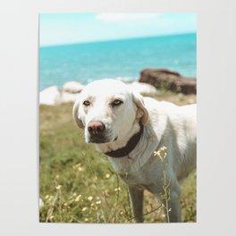 Art photograph - man's best friend Poster