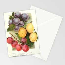 Chase Fruit & Flowers 1922 - Plums 2 Stationery Cards