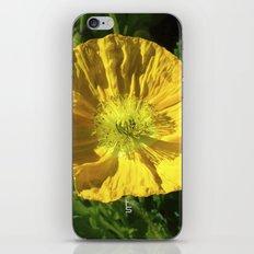 Golden Poppy iPhone & iPod Skin