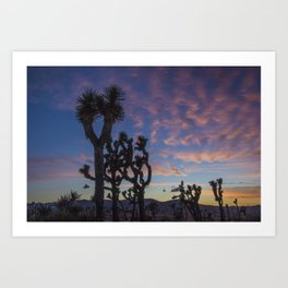 Sunset in Joshua Tree National Park Art Print