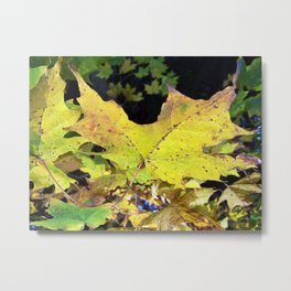 Spotted Maple Leaf Metal Print
