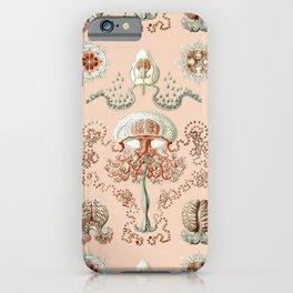 Ernst Haeckel - Jellyfish Scientific Illustration iPhone Case