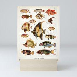 Adolphe Millot - Poissons des coraux - French vintage zoology poster Mini Art Print