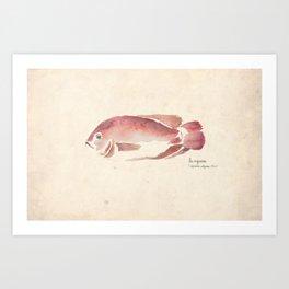 la mojarra roja Art Print
