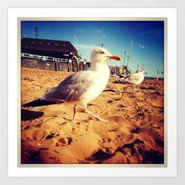 Seagul at Broadstairs Art Print