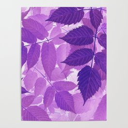 Ultra Violet Purple Leaves Poster