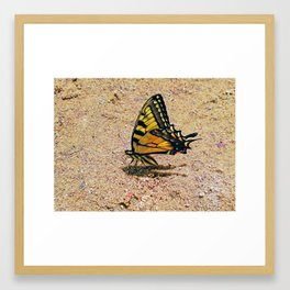 Playing in the sand Framed Art Print