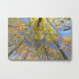 Brightly colored Autumn tree tops Metal Print