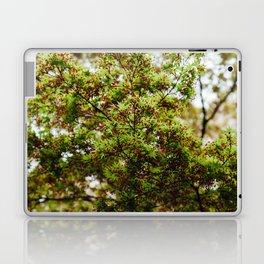 Fresh Japanese Maple Laptop & iPad Skin
