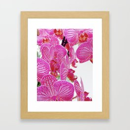 Alluring Orchids Framed Art Print