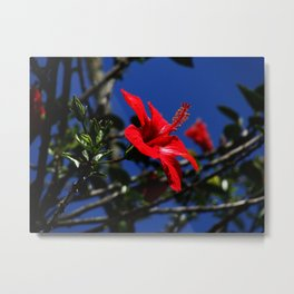 red hibiscus on dack blue Metal Print