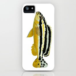 Malawi cichlids Melanochromis auratus female iPhone Case