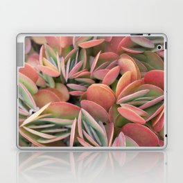 Succulents in Color Laptop & iPad Skin