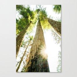 Regrowth Canvas Print