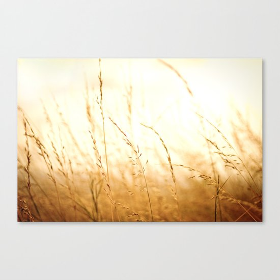 Fields of Bronze Canvas Print