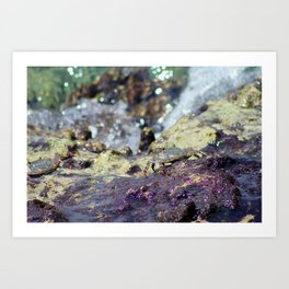Crab in the Cayman Islands Art Print
