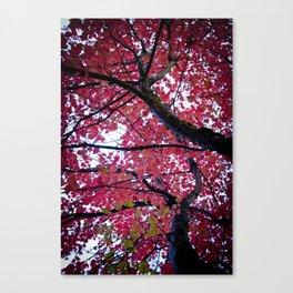 Autumn Lava Canvas Print