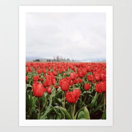 Signs of Spring - Skagit County Tulip Festival Art Print
