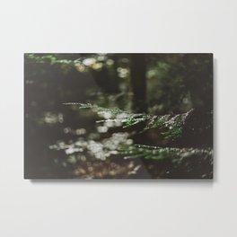 Forest Dark, Forest Deep Metal Print
