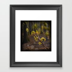 Walking through the forest in early spring Framed Art Print