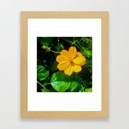 Large-flower Tickseed Framed Art Print