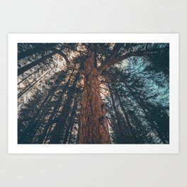 Trees All Around Art Print